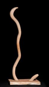 Lombriz/Earthworm 2003